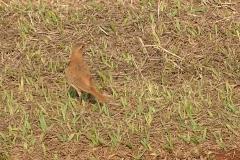 RDW-Brazil-13September-010-9