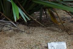 RDW-Waitangi-25September-152911.jpg