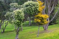 RDW-Waitangi-25September-153151.jpg